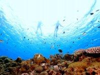 サンゴが彩る美しい海の世界