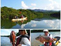 ツアー当日の状況によっては、マングローブ林でも釣ります。