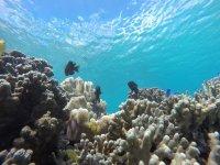 一年を通して温かい沖縄の海には、カラフルな熱帯魚がいっぱい
