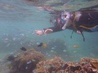 たくさんの海の生き物に出会えるビーチエントリー