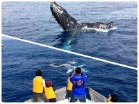 クジラを驚かさないように無理な操船はしないこだわりがあります。こんなに船に近寄ってきてくれることも!