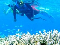無人島ではシュノーケリングも楽しめます。豊かなサンゴとトロピカルなお魚たちに感動!