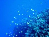 海の中はお魚で彩り豊か!