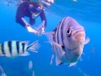 お魚たちともこんなに近くで泳げます!