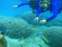 洞窟の前にはサンゴ礁の海が広がっていて、カラフルな魚たちに出会えます