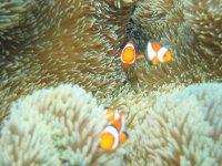 お魚いっぱいの海!シュノーケリングをして海の中をお散歩しよう