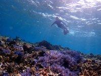 サンゴの楽園に迷い込んだような景色が広がります。