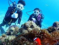 お魚とサンゴが一杯!人気のクマノミにも会える「ゴリラチョップ」で沖縄の海を体験ダイビングで満喫!
