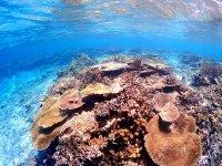 美しいサンゴ礁群、八重干瀬の実力をご覧あれ