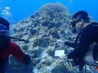 絶景の座間味島で体験ダイビング