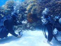 自然ゆたかな渡嘉敷の海