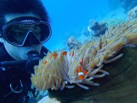 海の人気者クマノミ発見