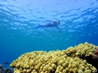 ダイナミックな地形やワイルドなサンゴ礁など自然の魅力あふれるポイントが豊富!