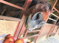 初心者やお子さまでも安心して乗れる馬たち
