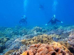 サンゴの花畑体験ダイビング