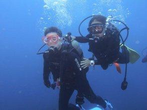 伊豆大島 体験ダイビング