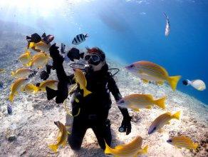 美ら海体験ダイビング