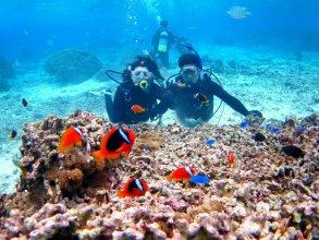 クマノミとサンゴ 体験ダイビング