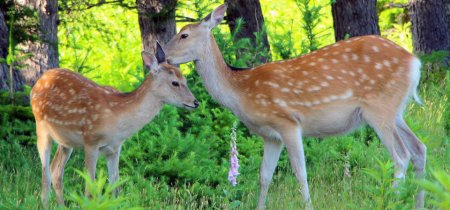 自然観察・動物観察