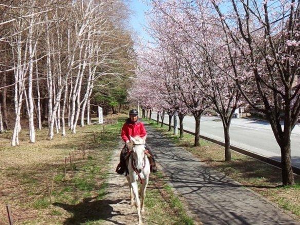 小淵沢 ホーストレッキング(乗馬)