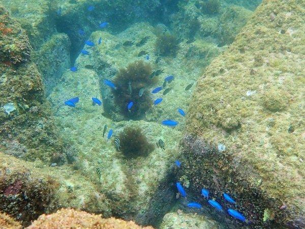 海の上を滑っていくような感覚を味わえるシーカヤック!下を見ると沢山のお魚達にも出遭えます!