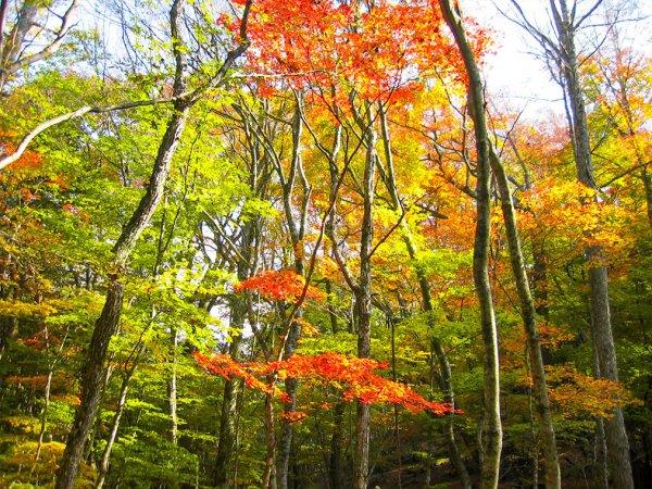 自然は四季折々の表情を見せてくれ、秋には紅葉に染まります。