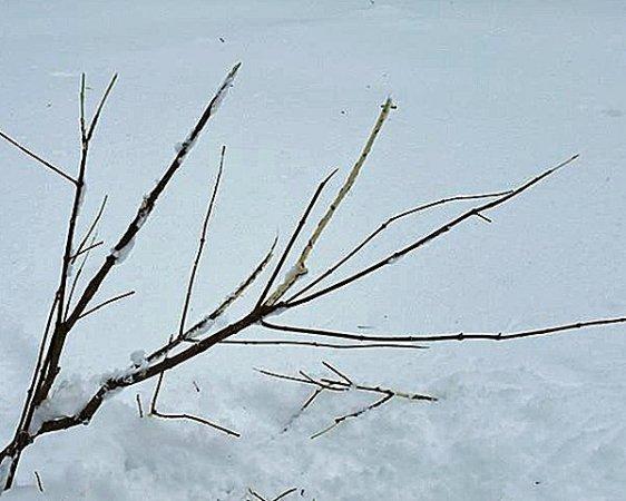 うんと冷えた日には木々も雪で薄化粧