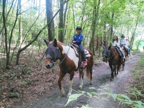 《騎乗2時間》林間ホーストレッキングコース