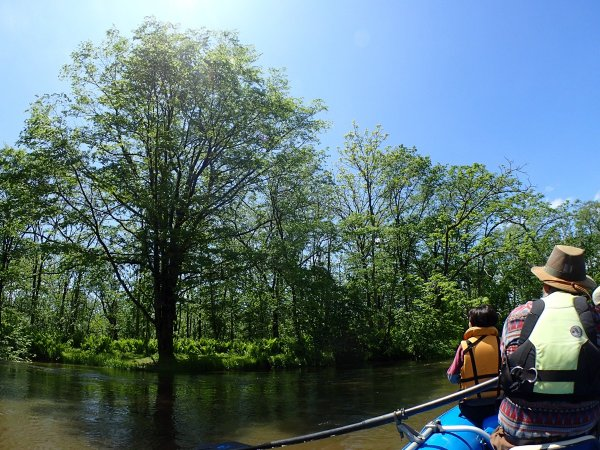 青空と樹々のコントラストが美しい