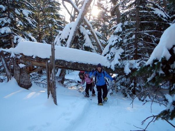 【冬の絶景スノーシューツアー】深雪時にはこのような雪の回廊を歩いていきます。