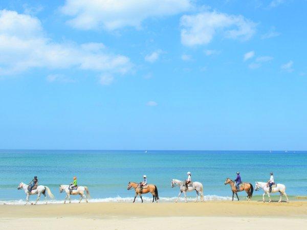 初心者の方でも安心して乗れる、経験豊富で安全な馬たちが、皆さんをお待ちしております。