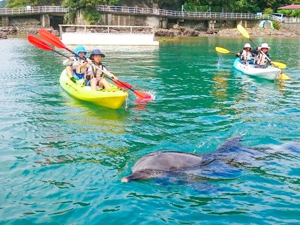 イルカと散歩  下田海中水族館イルカショー