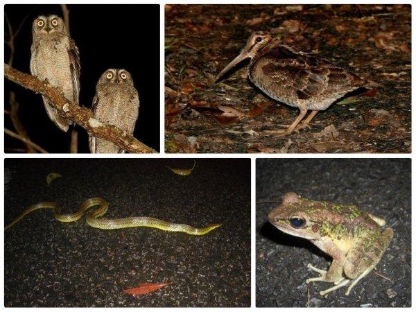 本島では見ることができない、珍しい生き物がたくさん!