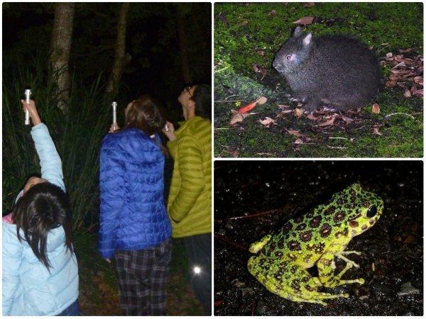 奄美大島 自然観察・動物観察