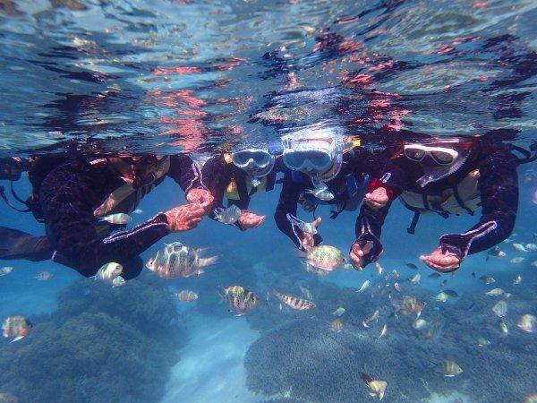 サンゴ礁の海でシュノーケリング♪