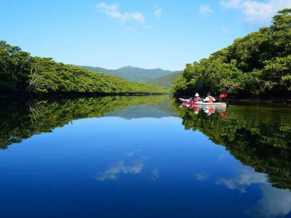 西表島 マングローブカヌー