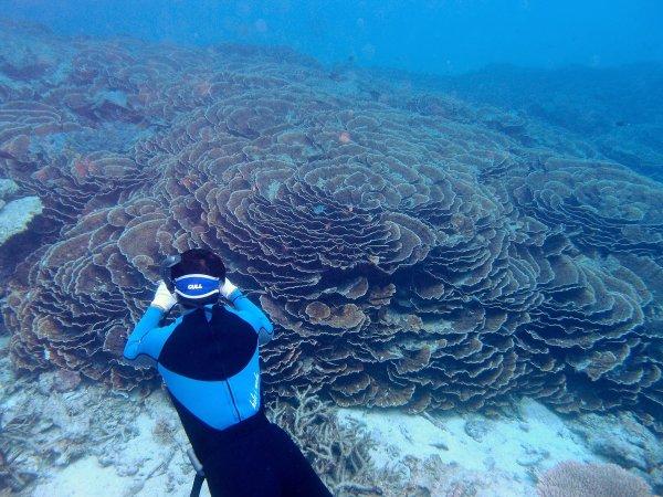 【大サンゴ礁&海亀】ポイントでシュノーケリング!日本最大級の琉球菊花サンゴ「通称バラサンゴ」やウミガメに会いに行こう!