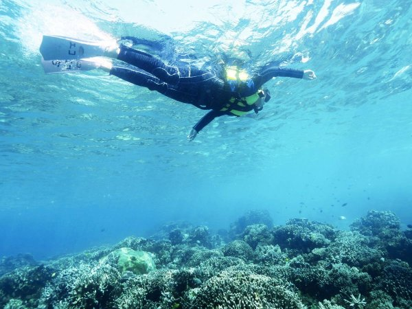 100種類以上のサンゴとサカナが住む『下地島カヤッファ(中の島ビーチ)』は、1年中おだやかで未経験者やお子様でも安心して楽しんでいただけます。