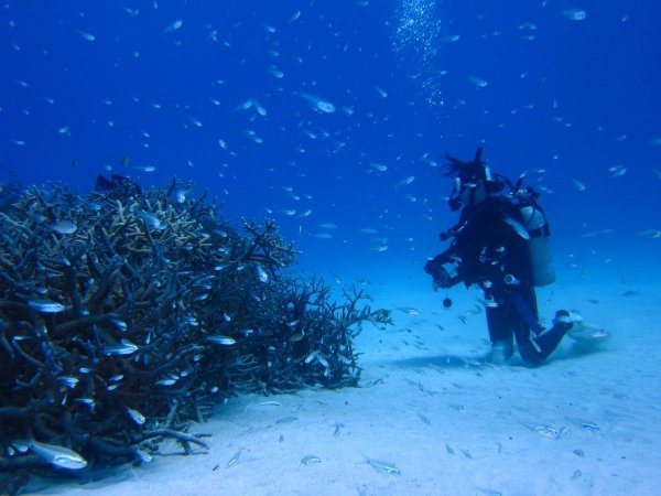 西表島 体験ダイビング&シュノーケリング