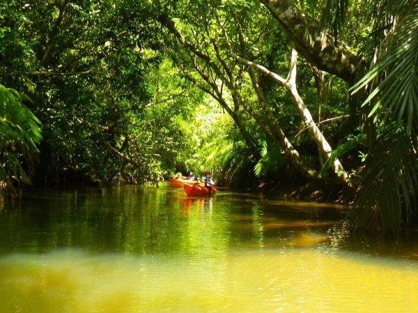神秘的な雰囲気のジャングル
