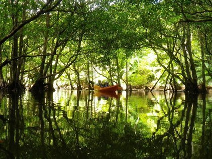 西表島 マングローブカヤック