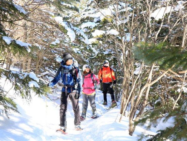 冬ならではの静かな林道スノーハイクも!ガイドが冬ならではの自然の魅力をご案内します!