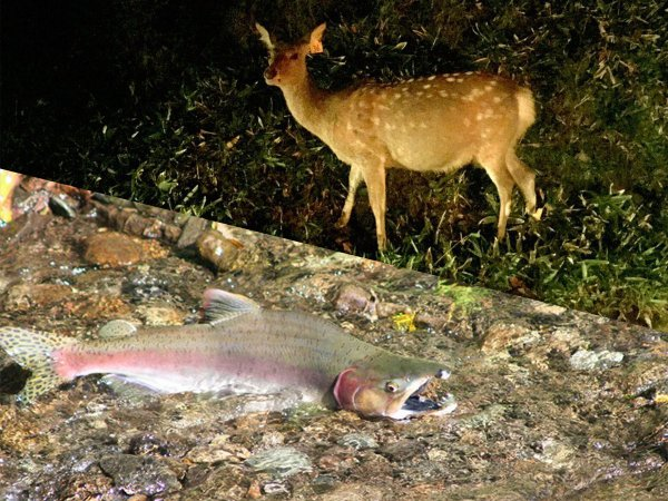 知床五湖周辺 自然観察・動物観察