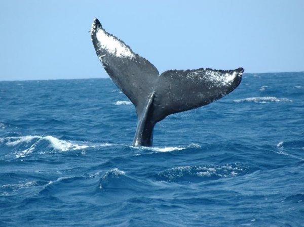 尾びれの形で個体識別。クジラのエピソードをお話しています。