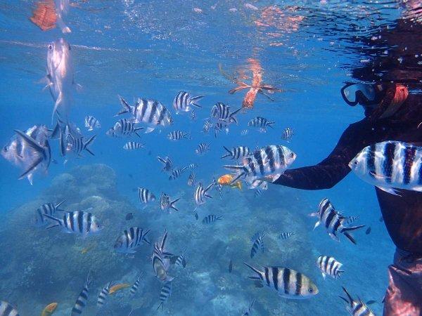 熱帯魚と一緒に泳いでみよう!