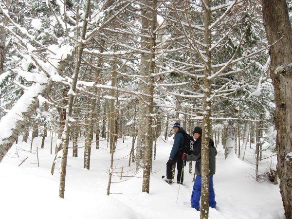 雪に包まれた原生林の中を歩きます