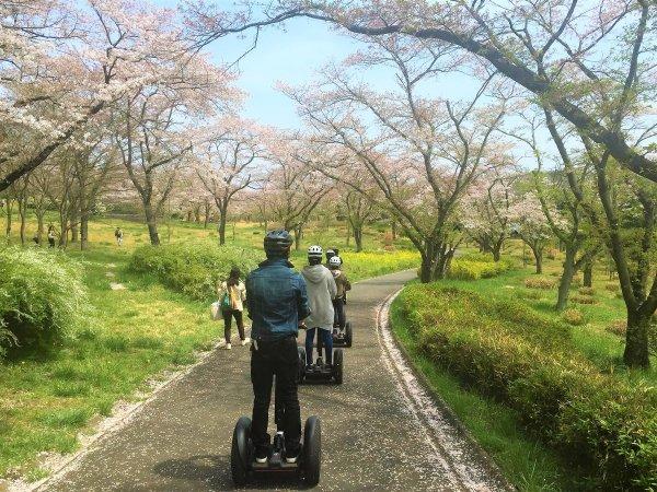 桜のトンネル!きれいだね~♪