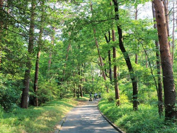 やさしい緑に包まれた森。鳥のさえずりを聴きながら走ろう♪