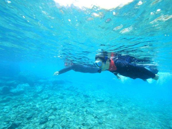 水の生き物たちを探してみよう!