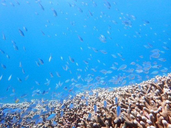 広大なサンゴ礁と色とりどりの熱帯魚